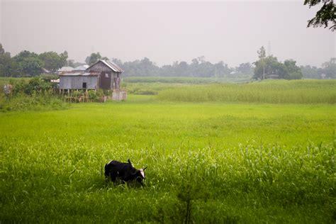 bangladesh green countryside hd windows wallpapers