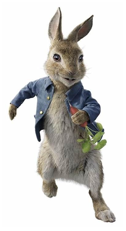 Rabbit Peter Character Parody Cottontail Wiki Main