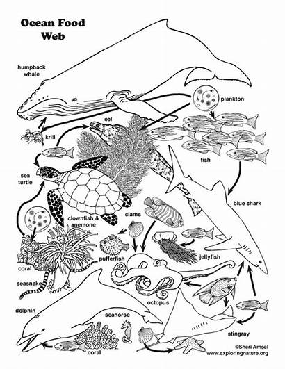 Chain Web Ocean Drawing Coloring Pages Animals