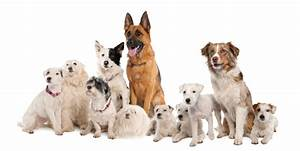 dog population