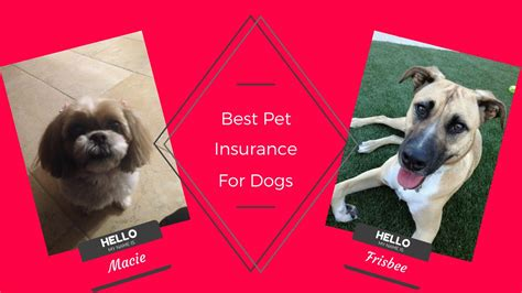 pet insurance  dogs youtube