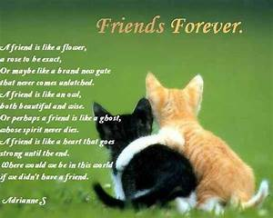 20 Best and Heart Touching Friendship Poems