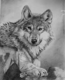 Awesome Wolf Drawings
