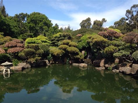 panorama of the koi pond yelp