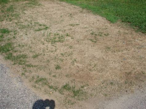 hydroseed grass hydro seed troubleshooting tips from always green in rhode island