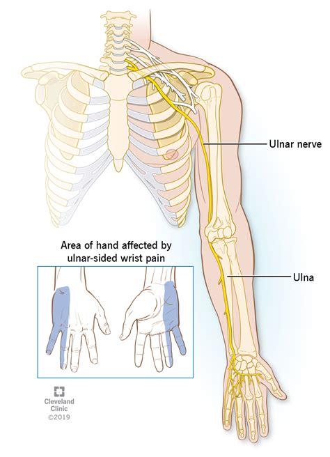 Ulna Diagram Neck by Ulnar Wrist Cleveland Clinic