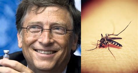 Bill Gates Plots To Eradicate Malaria With Genetically ...