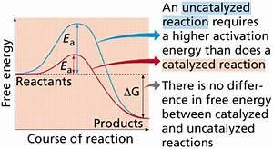 Reactions  U0026 Enzymes