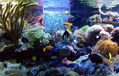 fish aquariums aquarium maintenance aquarium fish fish