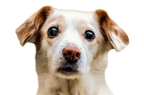 Pictures of Doge Head Transparent - #catfactsblog