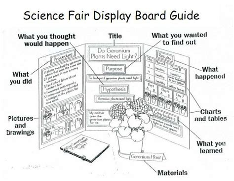 Diagram For Science Fair Project by 1000 Images About 1st Grade Science Fair Projects On