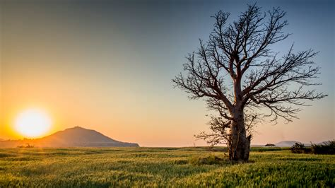 Tree Of Images Bare Tree On Grass Field 183 Free Stock Photo