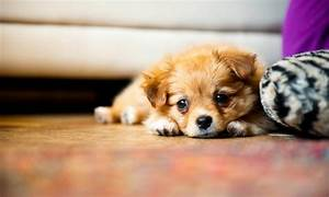 Puppy Photography 1080p Wallpapers | HD Wallpapers (High ...