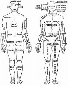 Loins Human Anatomy Gallery