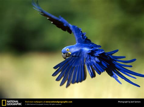 macaw bird macaw parrots as pets fun animals wiki videos pictures stories