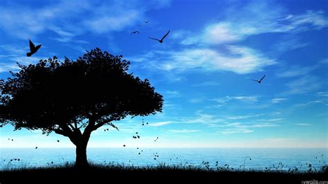 XiNature.com: Silhouette Clouds Trees Blue Night Birds ...