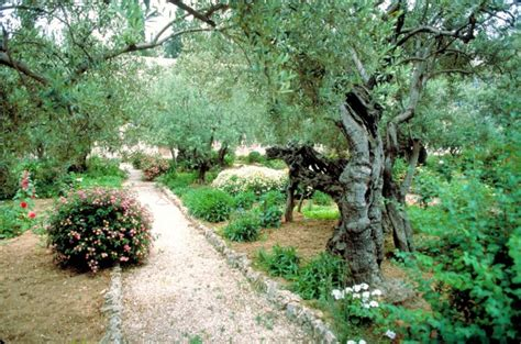 Garden Of Gethsemane Bible by In The Footsteps Of Messiah The Mount Of Olives