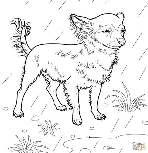 chihuahua coloring page  printable coloring pages