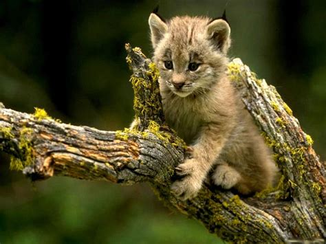 These Are The Cutest Wild Animals You Will Ever See