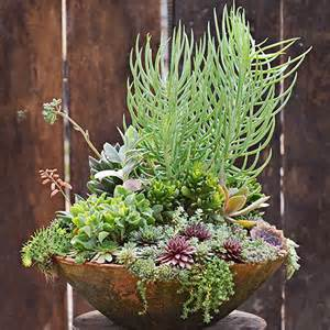 succulents succulent containers and container garden on