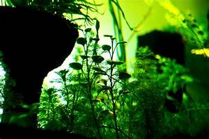 Aquarium L Form : u r b a n aquascaping 300l full set up led light for ~ Sanjose-hotels-ca.com Haus und Dekorationen