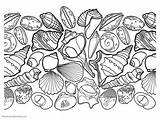 Coloring Seashell Pages Printable Beach Ocean Seashells Colouring Adult Print Themes Different Getcolorings Ones Pick Enjoy Without Some sketch template