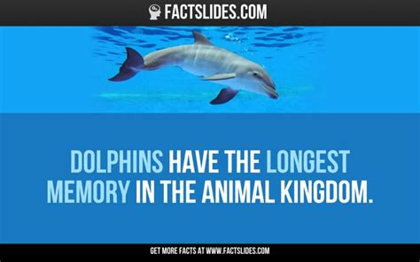 dolphin facts ideas  pinterest fun facts