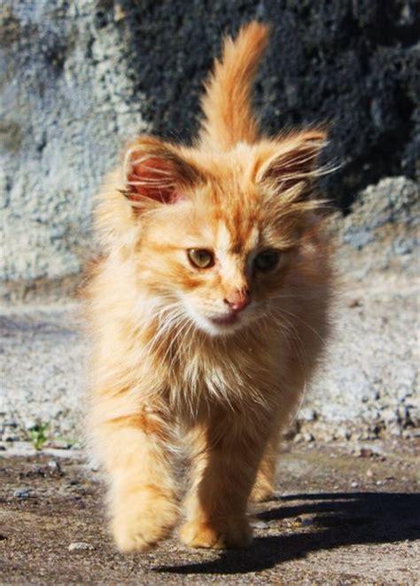katzenbilder  news von buergerreportern zum thema