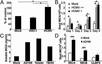 Shedding Mica Infection Hcmv Increased Proteins Associated