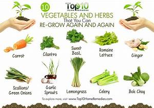 10 Vegetables and Herbs that You Can Regrow Again and