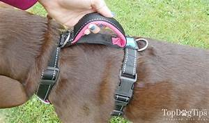 Types Of Dog Harnesses  Front