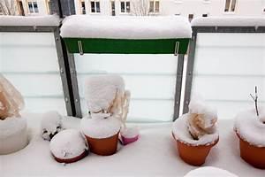 Balkonpflanzen Winterfest Machen : so machen sie ihre balkonpflanzen winterfest wohn ~ Watch28wear.com Haus und Dekorationen