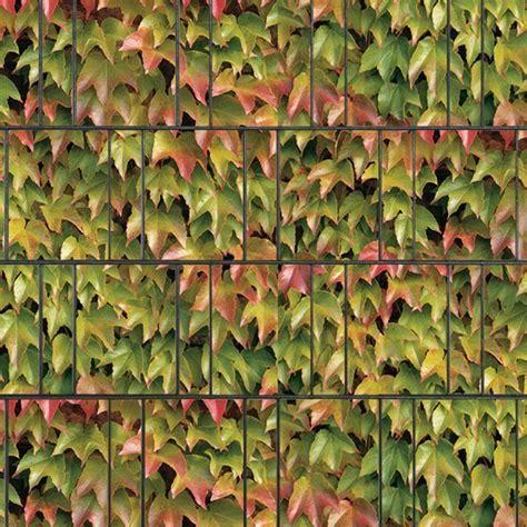 sichtschutzstreifen bedruckt motiv weinblatt bunt