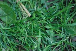 weeds  georgia    deal