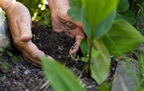 kaffeesatz als blumendünger für zimmerpflanzen mit kaffeesatz d 252 ngen garten und zimmerpflanzen mit
