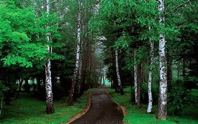 Road Tree Lined Trees Pathway Narrow Grass