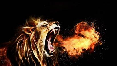 Lion 1080p Wallpapers Roaring King