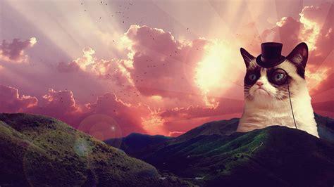 Cat Wallpaper Tumblr Pixelstalknet