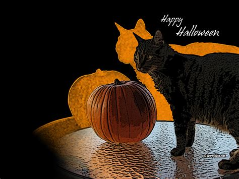 Wallpaper Cat And Pumpkin by Wallpapers Desktop Backgrounds On