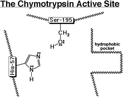 Histidine Imidazole