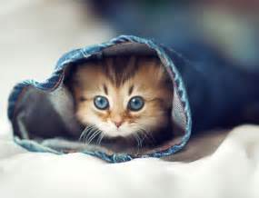 cutest cats in the world world s cutest kitten cats photo 33703461 fanpop