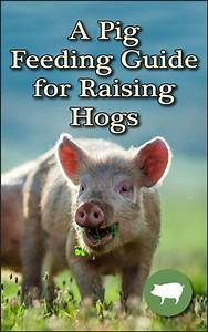 A Pig Feeding Guide For Raising Hogs