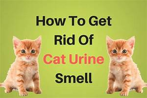 How to get rid of urine smell in bed 28 images for How to get rid of urine smell in bathroom
