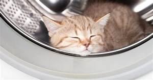 Laver Un Chaton : un chaton reste coinc dans une machine laver en marche ~ Nature-et-papiers.com Idées de Décoration