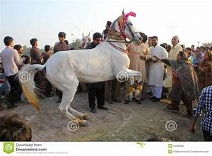Marriage Dance Horse editorial photo. Image of lahore ...