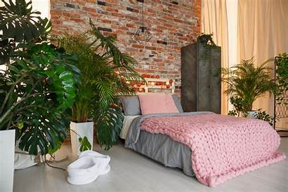 Pflanzen Schlafzimmer Plants Bedroom Piante Fluch Segen