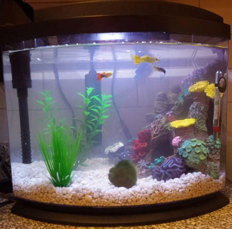 why is my fish tank cloudy cloudy water fish swimming up top bubbles not popping my aquarium club