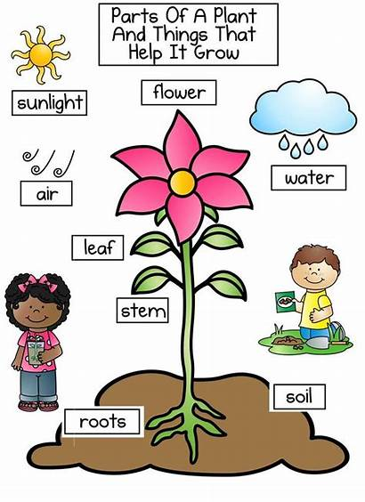 Plant Clipart Science Worksheet Planting Lima Plants