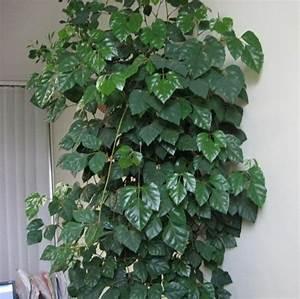 Grande Plante D Intérieur Facile D Entretien : plante d 39 int rieur super d co et facile d 39 entretien la ~ Premium-room.com Idées de Décoration
