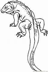 Lizard Coloring Pages Coloringpages101 sketch template